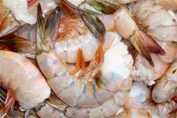 Alfa Gamma Seafood shrimp