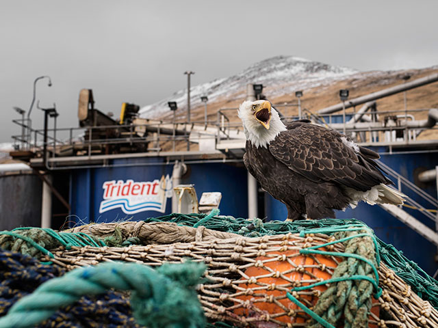Trident Seafoods Copes with Covid-19 Outbreak at Alaska Plant on Eve of Busy Pollock 'A' Fishing Season